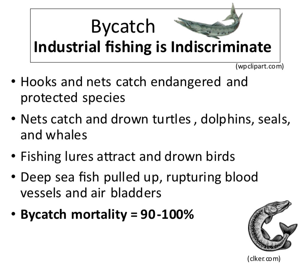 Graphic illustrating the animals and death caused by bycatch